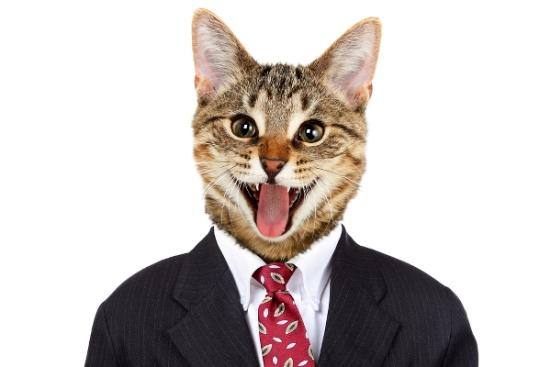 cats-politics-tn